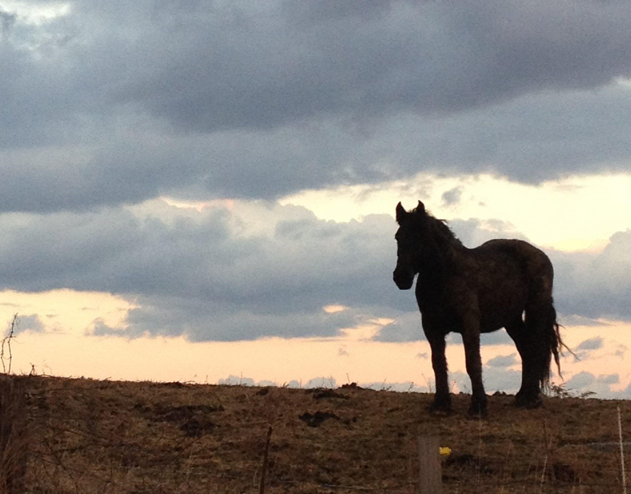 Farm Profile: Greyrock Farm